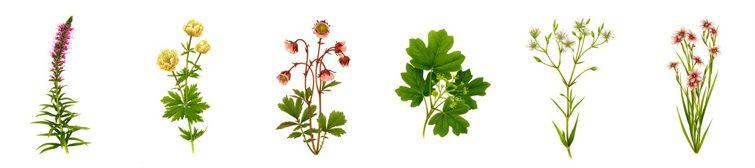 projeto de floricultura mercado palhano londrina 2011 inspiração